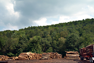 Highland County Log Yard