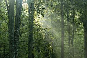 Blue Ridge Lumber Company Green Forestry